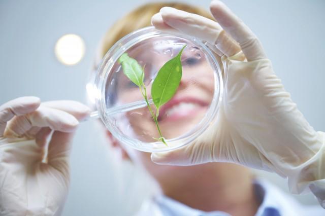 Növényi utak a rák legyőzésében