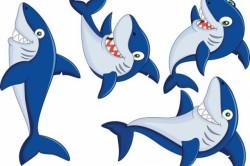 Új cápafajt fedeztek fel