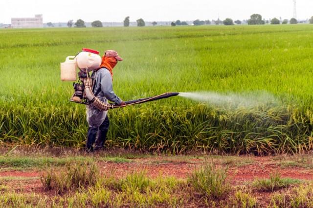Rákot és meddőséget okozhatnak a hamis növényvédő szerek