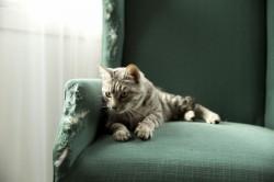 Nagy Macskás Felmérés - a cicák is tudnak stresszelni!