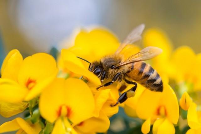 Kiszivárgott egy méhvédelmi javaslat