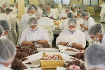 Milliárdos üzlet az illegális hal