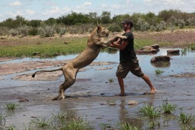Állatok Világnapja - veszélyeztetett fajok