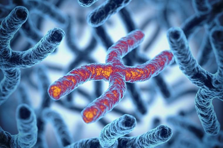 Új gént azonosítottak egy ritka betegség kialakulásának hátterében
