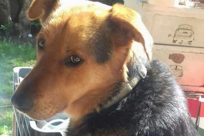 A kutyatartás csökkentheti a halálozás kockázatát