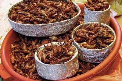 Laborban előállított bogarak fogyasztására buzdítanak európai tudósok