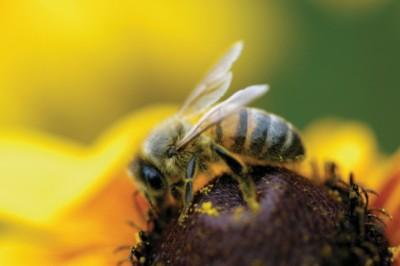 2018-ban már a méheknek is lesz világnapjuk