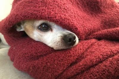 Hogyan hat a változékony tél a kutyákra?