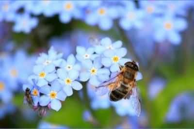 Megúszták a méhek! Betiltottak 3 méhgyilkos vegyszert Európában