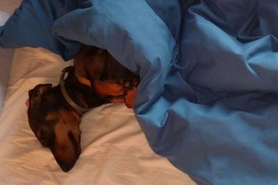 Házikedvenc-kutatás: a kutya legyen családtag!